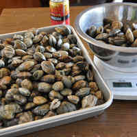 How to Preserve Manila Clams (Asari) in the Freezer