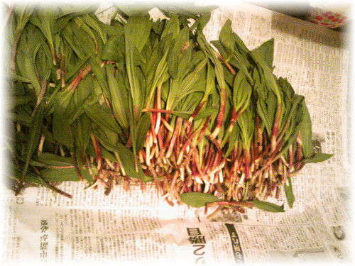 How to Prepare and Enjoy Ramps