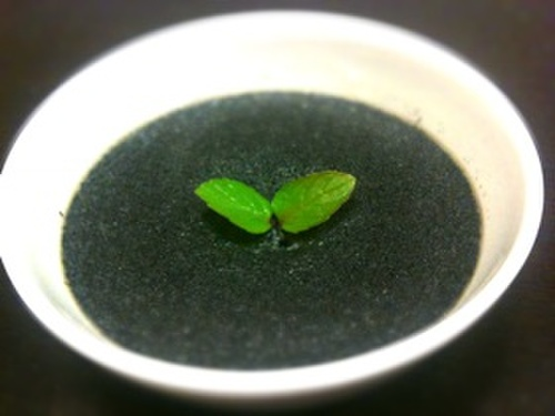 Easy and Delicious! Black Sesame Pudding