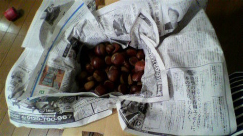 How to Store Chestnuts So They Become Sweet