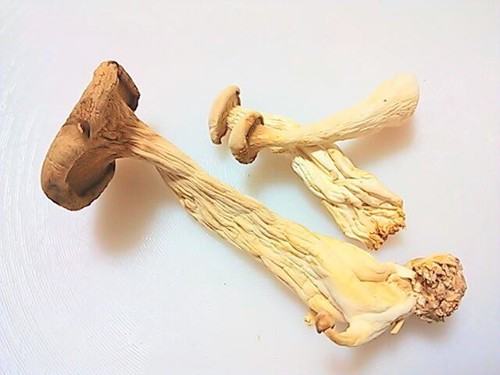 Umami and Nutrition Packed Dried King Oyster Mushrooms