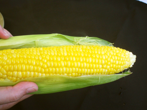 Simple Corn on the Cob! Microwave