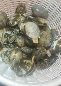 How To Quickly Remove Sand From Manila Clams